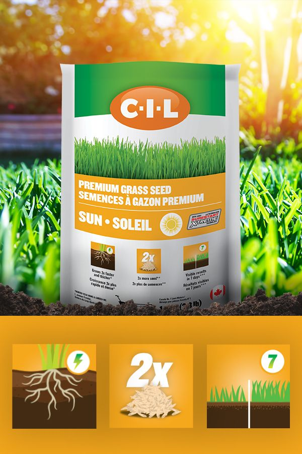 Perfect For Seeding A New Lawn Overseeding Or Fixing Bare Spots In Sunny Areas Of Your Garden 2x Faster And Thicker Visible Re Grass Seed Seeds Seeding Lawn