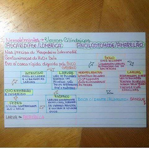 Biologia - verminose 2