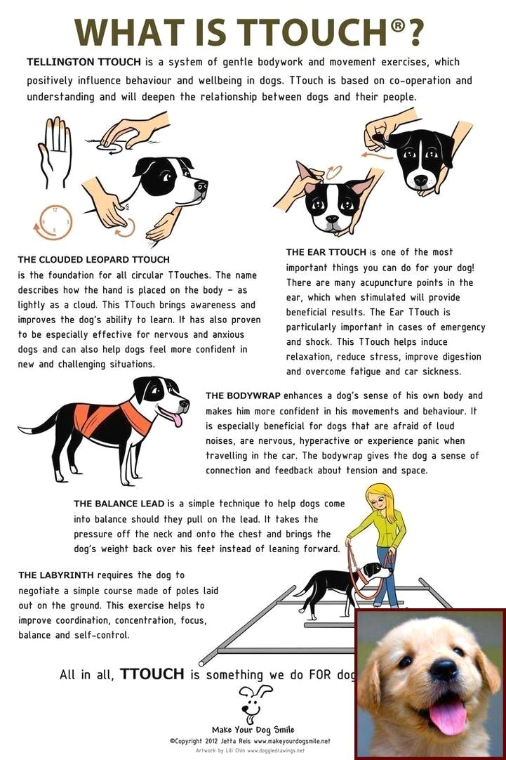 House Training A Shih Tzu Puppy Uk And Dog Behavior Joy Puppy Training Dog Care Dog Training Obedience