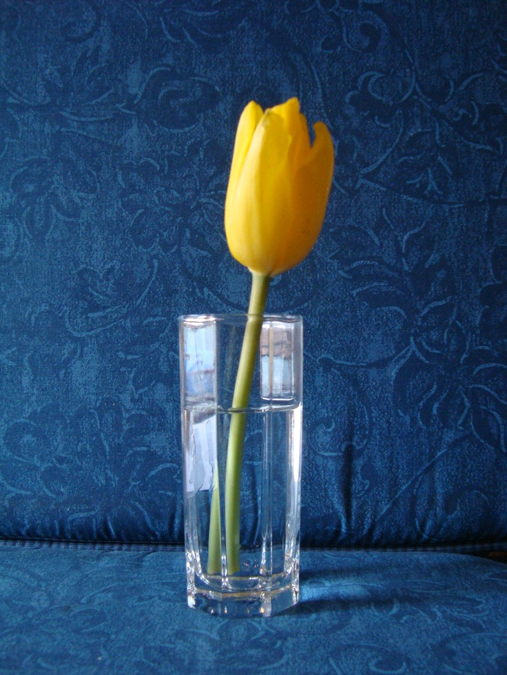 Il tulipano solitario  di Emma Saponaro