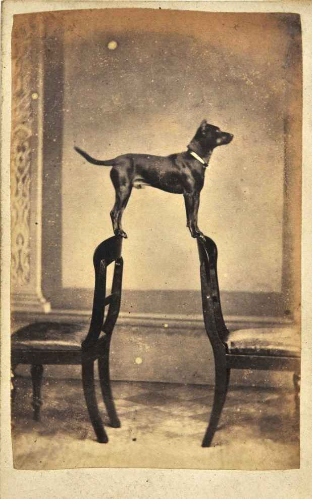(This dog is trying not to say anything because he fears the weight of a mere thought may spell doom.) | 19 Vintage Dogs Who Just Didn't Want To Be Photographed