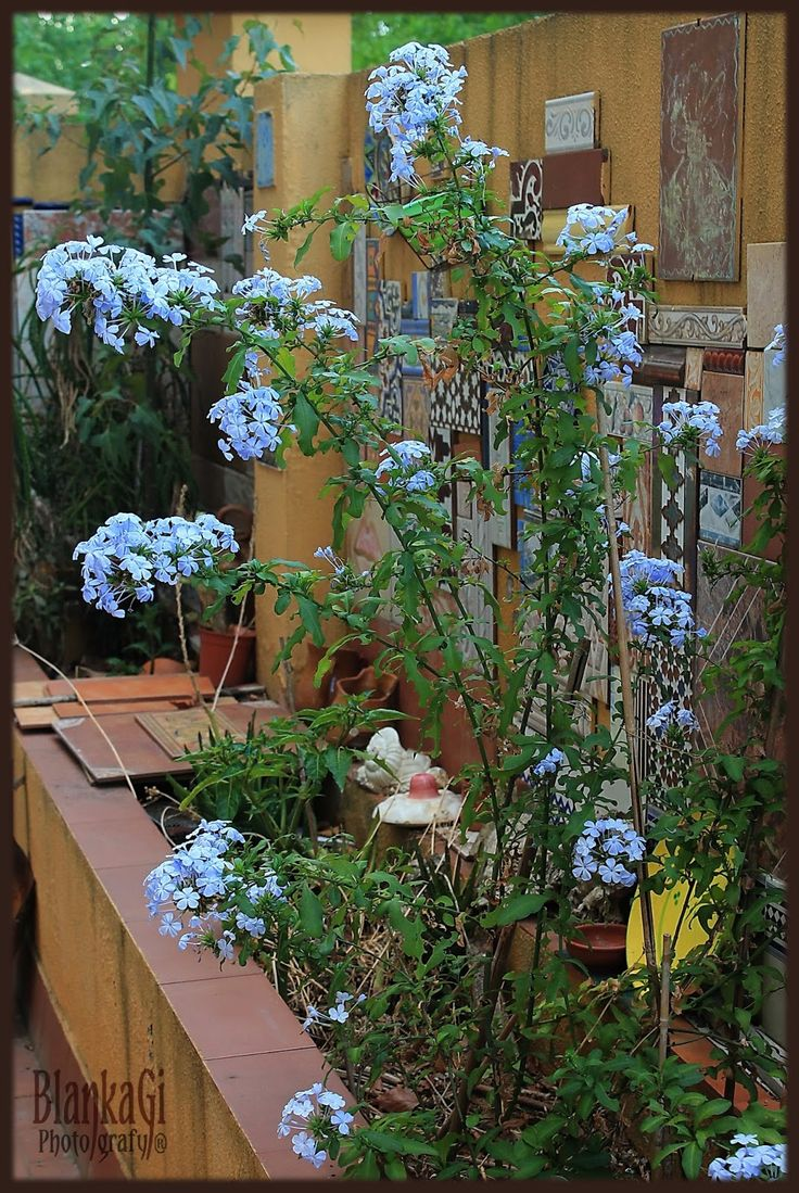 25 best images about plantas on pinterest robins for Plantas para patios