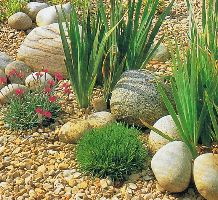 Nice use and placement of medium and small 'pebble' type stones in this gravel garden