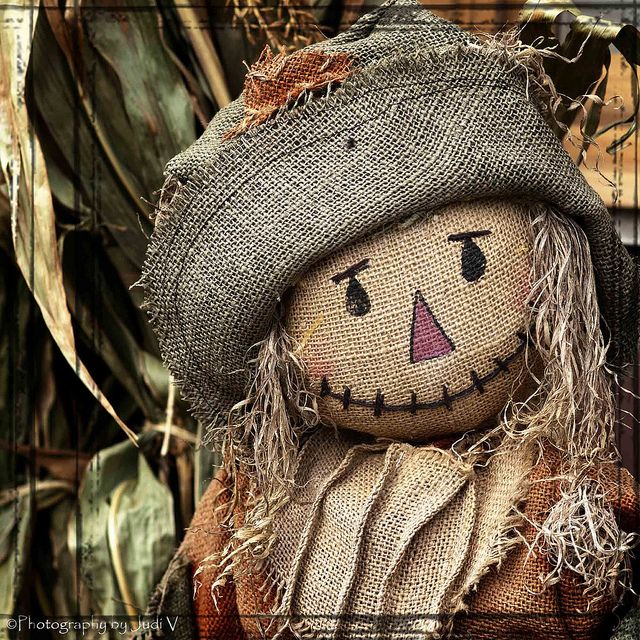 "lillypotpie:  "" Charming Scarecrow by Photography by Judi V on Flickr.  """