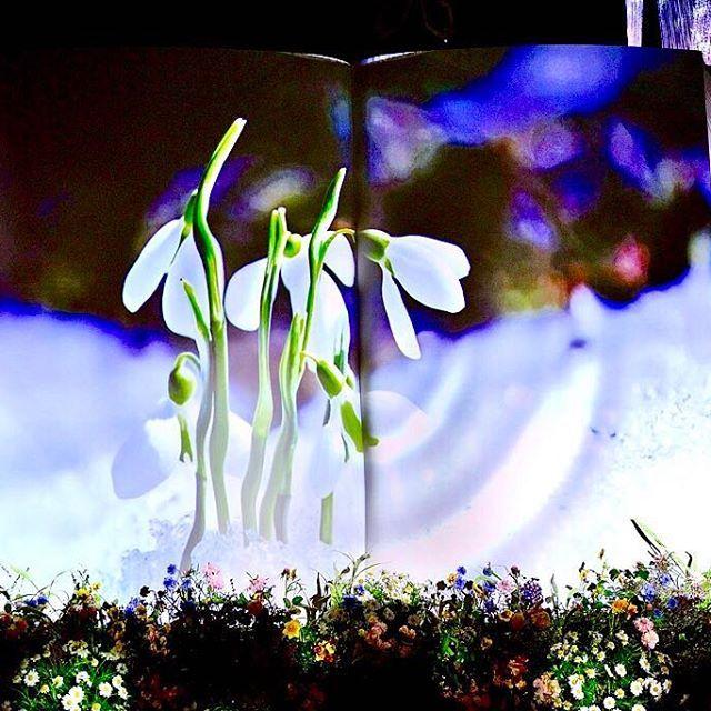 【yuzo2chaki】さんのInstagramをピンしています。 《#プロジェクションマッピング #コレド室町 #日本橋三井ホール #flower #花 #桜 #日本で一番早いお花見 #日本橋 #立春 #flowersbynaked #花の体験型アート展 #綺麗 #アーティスト #クリエーター #アート #イベント #フラワーズバイネイキッド #nuromachi #coredo #tokyo #japan #art #artist #projectionmapping #nihonbashi》