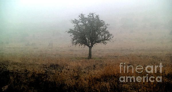 """Tree in the fog"" Digital edited photo from my photo gallery"
