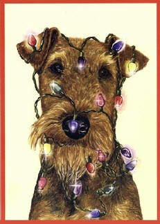Airedale Xmas Cards from www.ragtail.co.uk