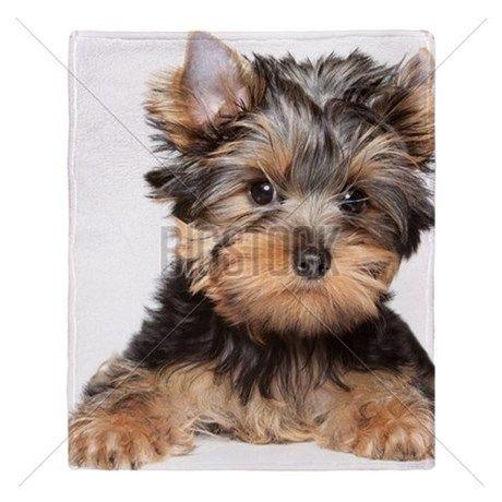 Yorkshire Terrier Close-up Portrait Throw Blanket on CafePress.com