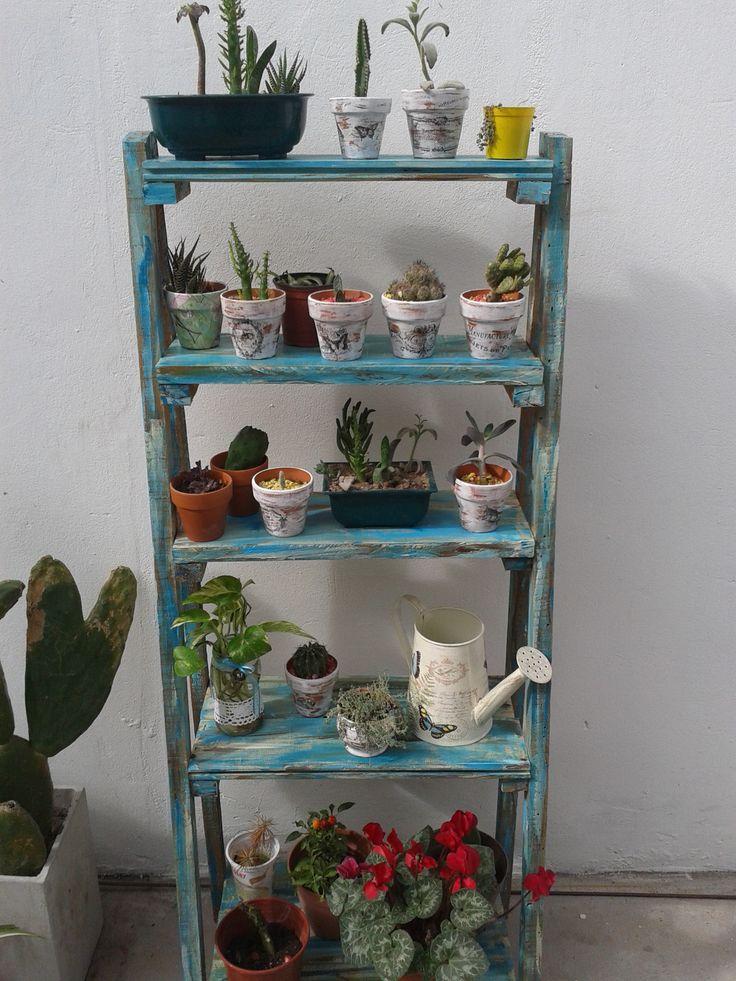 soporte para cactus suculentas--