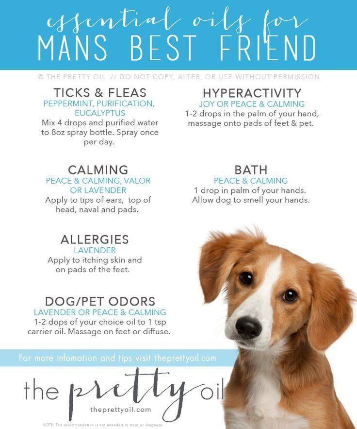 Yl Pets Young Living Essential Oils Pinterest Pets