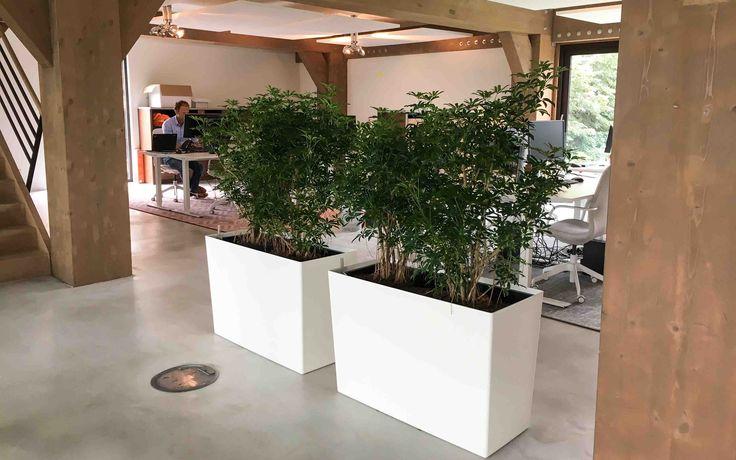 Rise planter met Schefflera in Nieuwegein Hydrocultuur | Interieurbeplanting | Onderhoud | Planten | Interieur | Inrichting | Bedrijf | Kantoor | Kantoorplanten