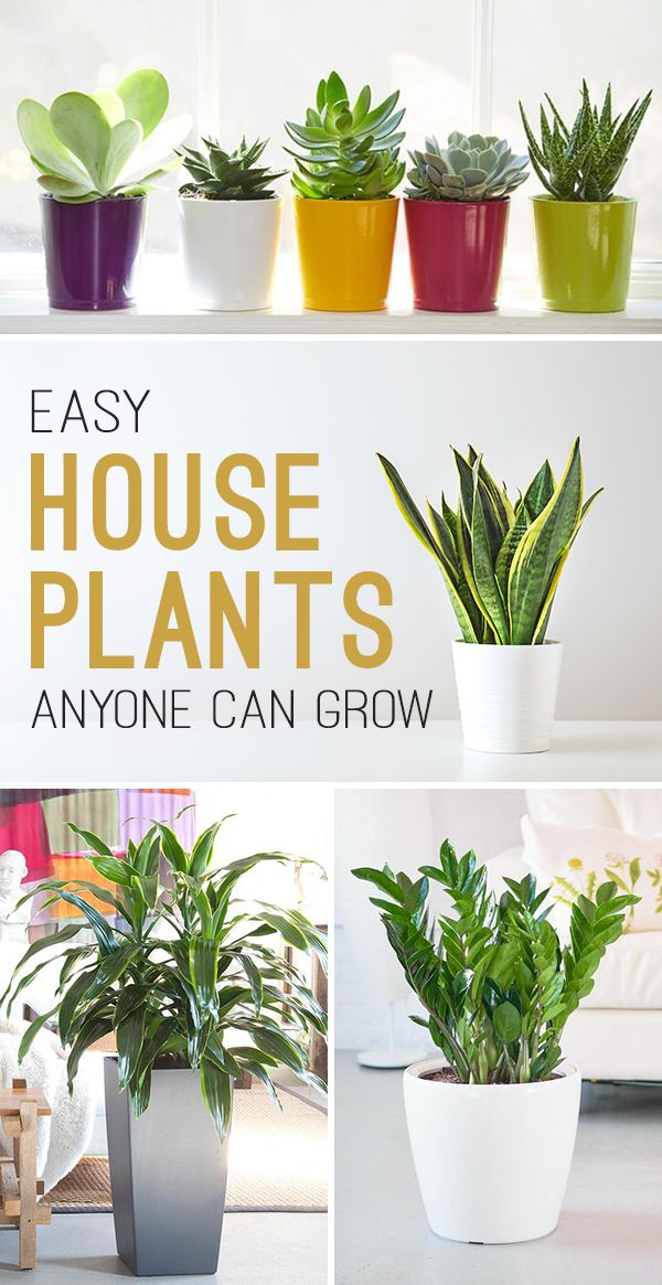 Easy House Plants Anyone Can Grow Plants Easy House Plants