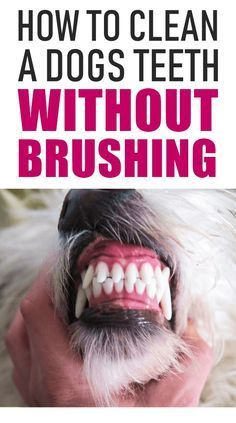 Dental care is so important for our dogs. Yes, you need to clean your dog's teeth but you can do it at home without brushing. #dogcare