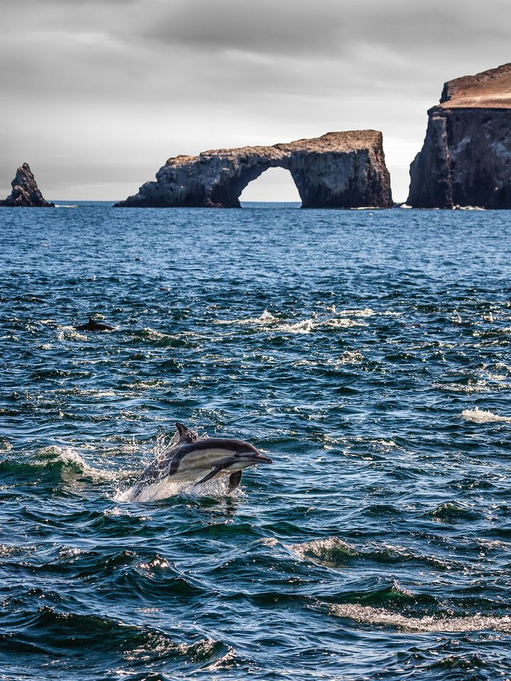 Arch Rock Dolphin, Channel Islands, California; photo by Greg Clure