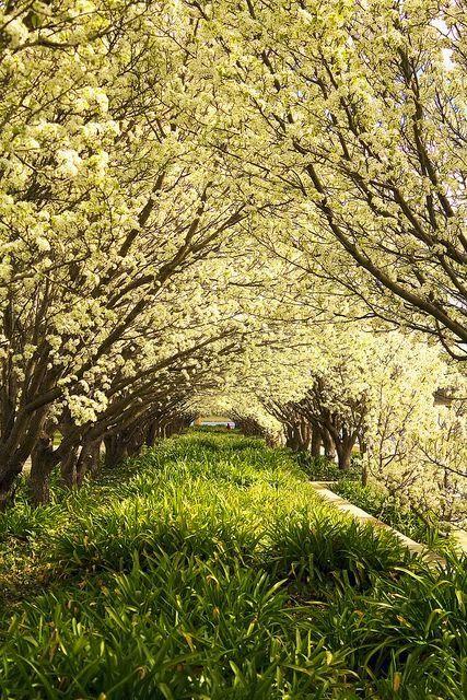 Blossoms Garden , Canberra - Australia
