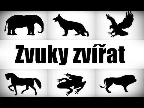 Zvuky zvířat - Zvířat zvuky pro děti - YouTube