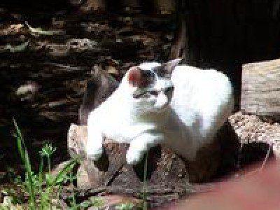 """Türkischer Van – Wie ein Löwe liebt der Van es, seinen """"Stolz"""" von oben zu überblic … – Cats"""