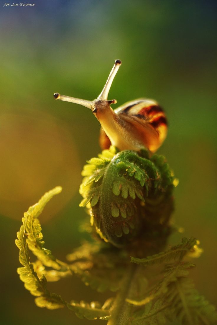 Snail peers curiously at the wide world -zu  For more original poetry follow: https://www.pinterest.com/TheWhiteSeaGirl/poetry-in-nature/