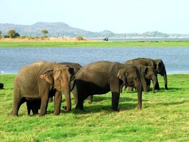 ± 13 dagen Sri Lanka - Reisaanbod 2016 - Avantareizen.nl - Avontuurlijk reizen