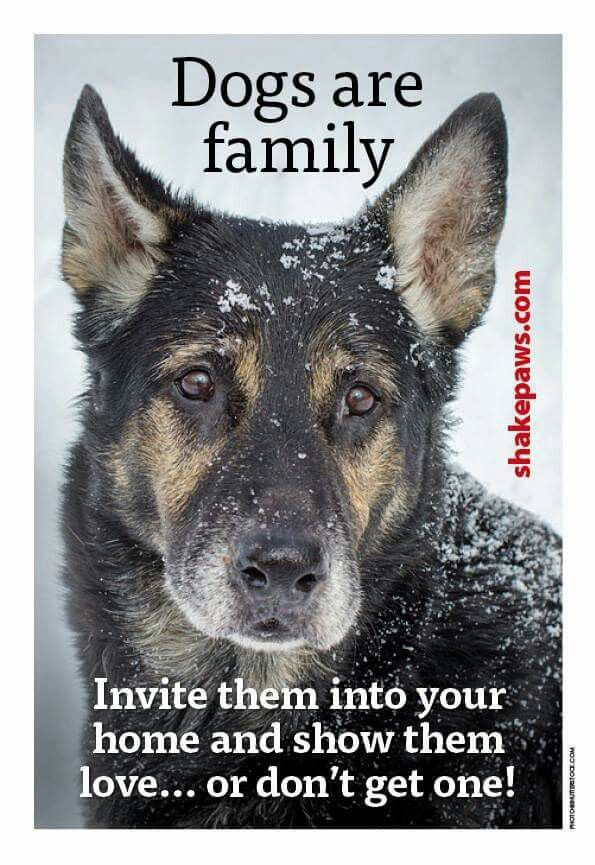 Dogs are family <3