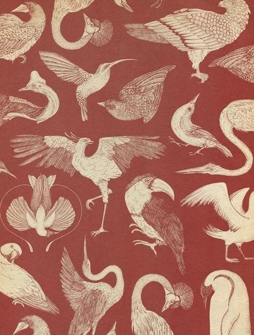 Новости | Обои искусство, Палитра обоев, Обои с птицами