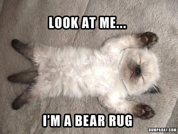 Or a kitty rug...hahaha