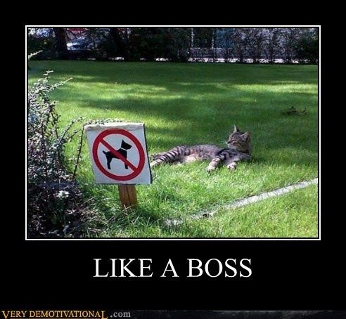 Lmao: Like A Boss, Cats, Animals, Dogs, Funny Stuff, Humor, Photo, Likeaboss