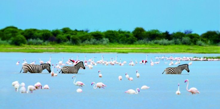 Zebras and flamingoes by Heinrich van den Berg on www.digitalgallery.co.za