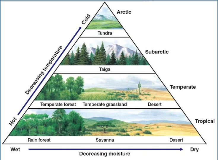 Biomes Science Class Summary 6 World Biomes