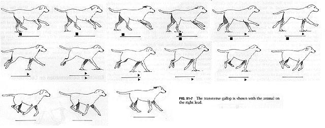 Dog Walk Reference