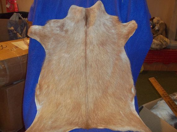 Tanned Goat Hide skin real animal fur taxidermy rug by boomer2563, $29.95
