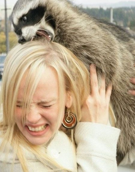 I wish this wasn't so funny & I hope that's a pet raccoon