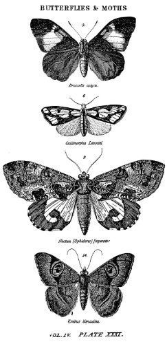 Stampers Anonymous Tim Holtz Mounted Red Rubber Stamp 2.5 by 5-Inch, Butterflies and Moths 1 by Stampers Anonymous