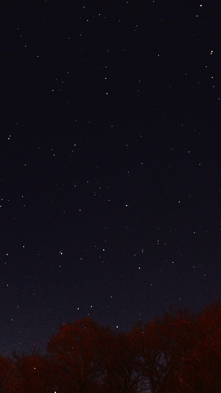 papers.co-nc26-night-sky-dark-star-lights-tree-nature-33-iphone6-wallpaper