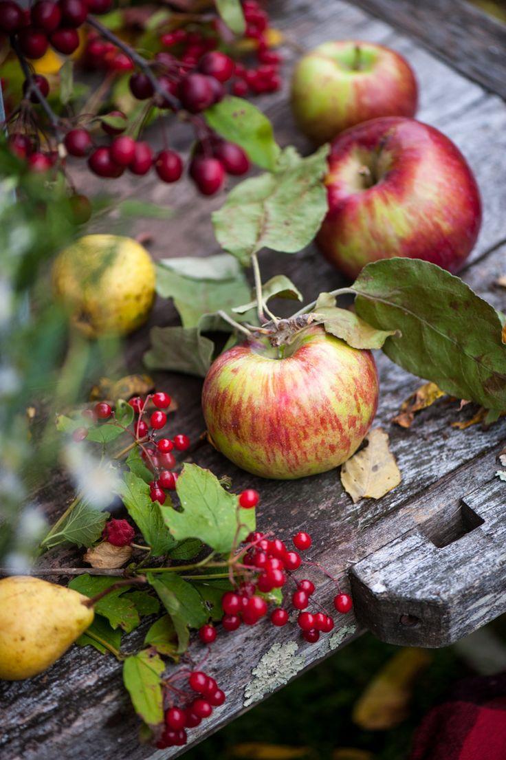Mele, pere e piccole bacche rosse sono tra i tesori che regala la natura in autunno