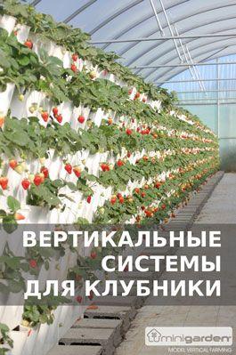 Сыр из козьего молока c созреванием в 60 дней | Сыроделие в Беларуси