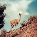 Fauna - Explora Valle Sagrado