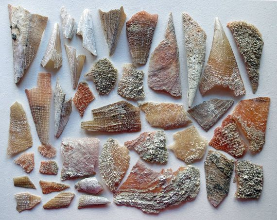 38pcs Natural Pinna Shell fragments  Jewelry by MrsBeachComber