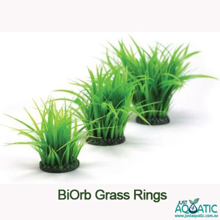 BiOrb Grass Rings