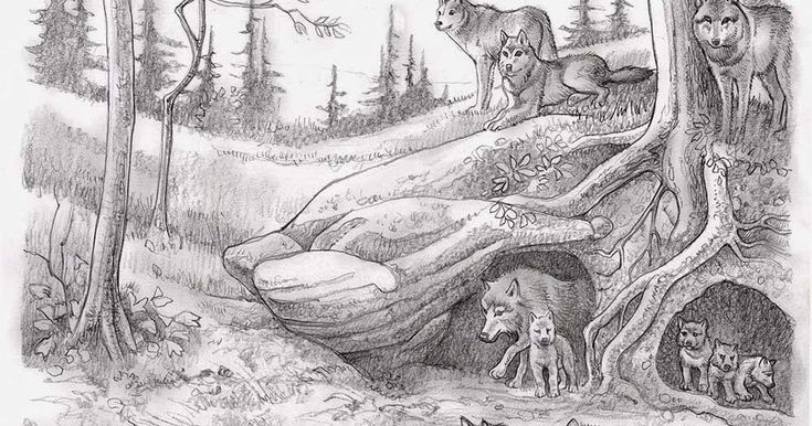 「wolf den」の画像検索結果