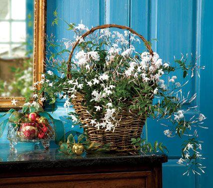 Beautiful Jasmine bouquet.