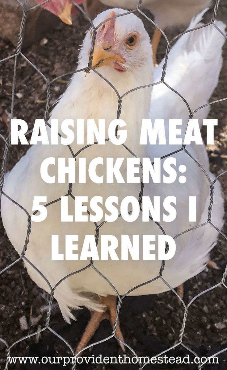 Have you tried raising meat chickens on your homestead? Click here to find out how we did it and learn from our mistakes too. #homesteading #chickens #meatchickens via @ourprovidenthom