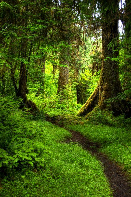 Bosques mágicos y Jardines secretos : Foto