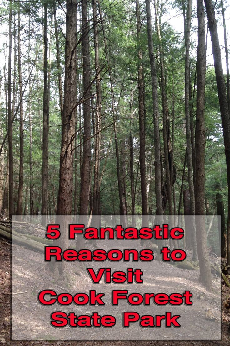 5 Reasons to Visit Cook Forest State