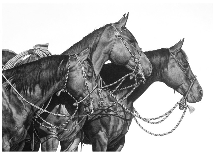 Karmel Timmons: Equestrian Art In Pencil: Portfolio