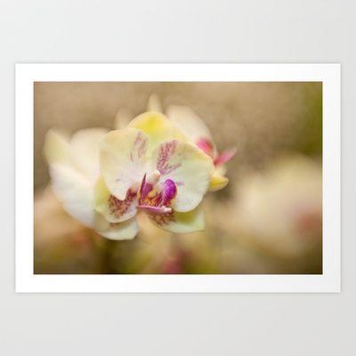 Finding Beauty   #macro #lensbaby #flower #orchids #dof #bokeh