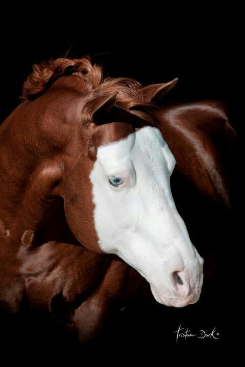 Gorgeous horse