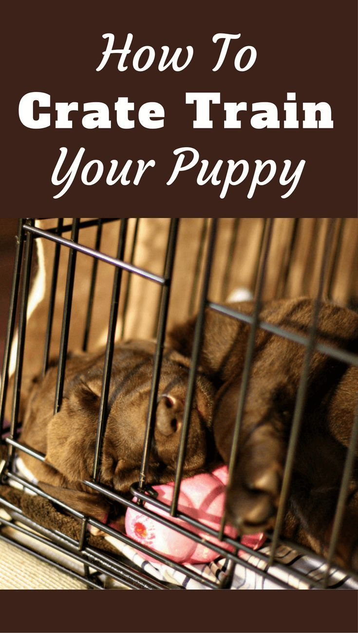 Your Complete Guide On Crate Training A Puppy During The Day
