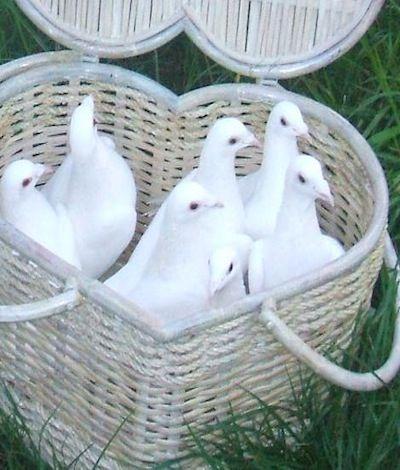 Disney snow white Wedding ~ Release of Doves