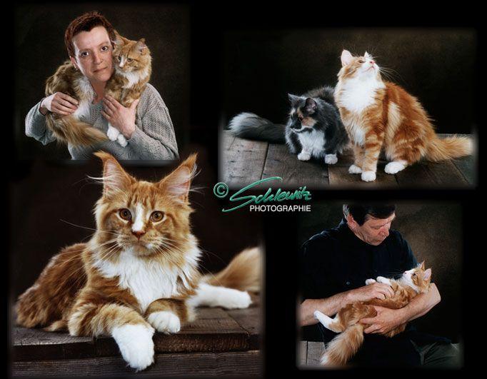 Fotograf Hannover, Portrait mit Katzen